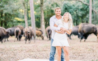 Romantic Buffalo Scenes